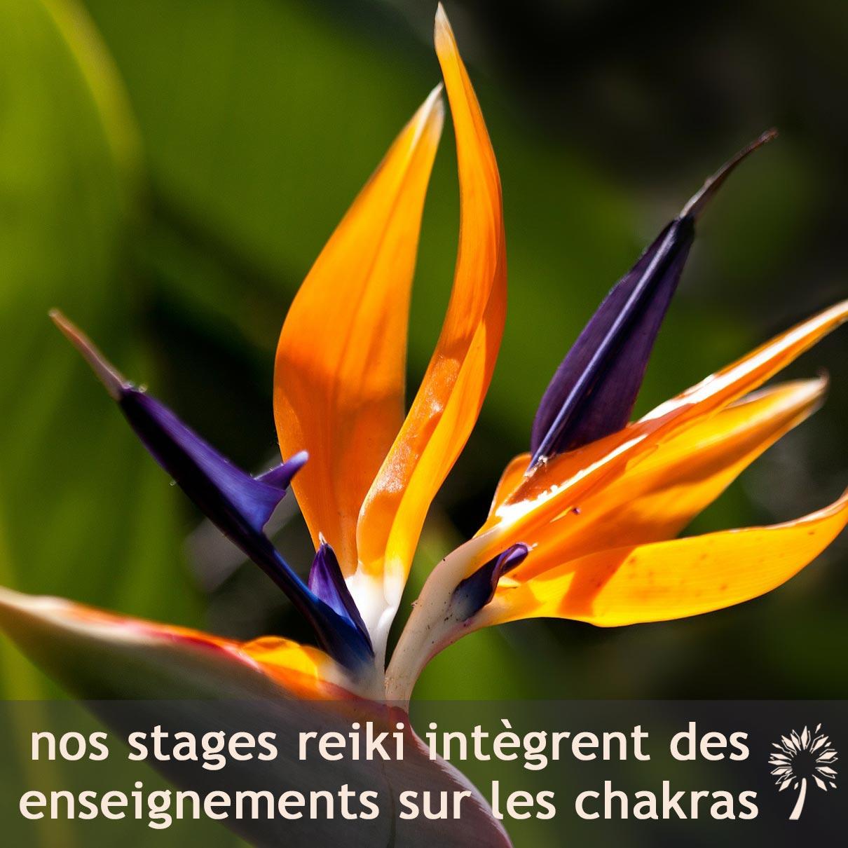 Nos formations de 1er et 3e degré de Reiki Usui intègrent des enseignements sur les chakras