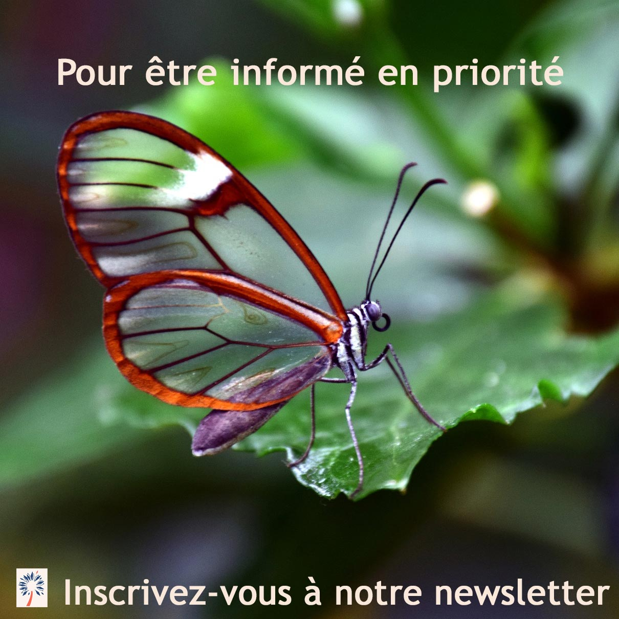 Newsletter Reiki Usui