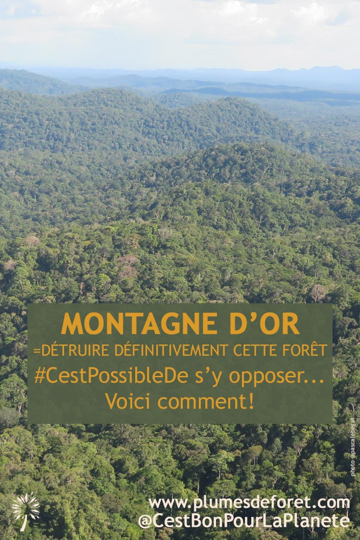 Montagne d'Or c'est non et or de question !