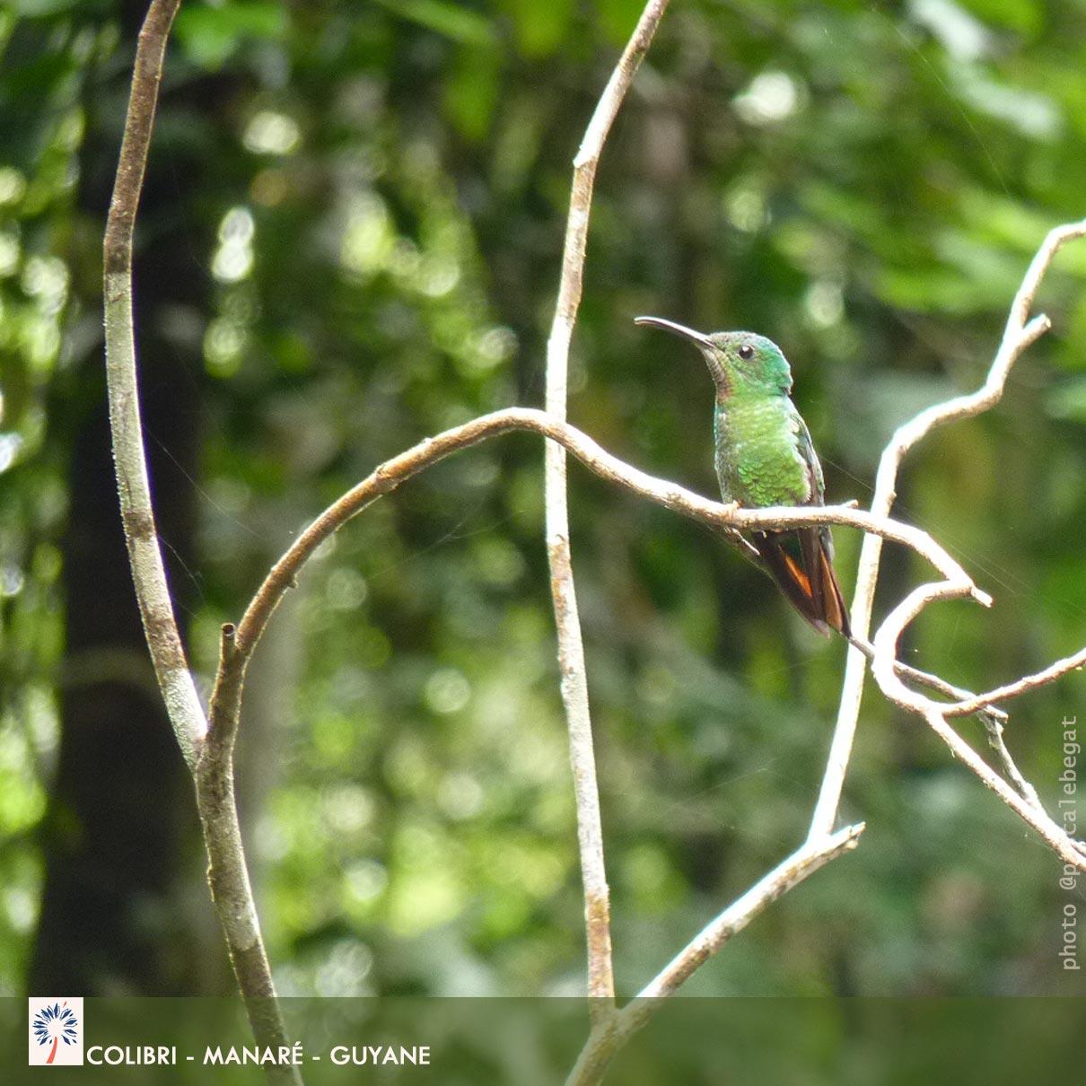 Biodiviersité - Amazonie