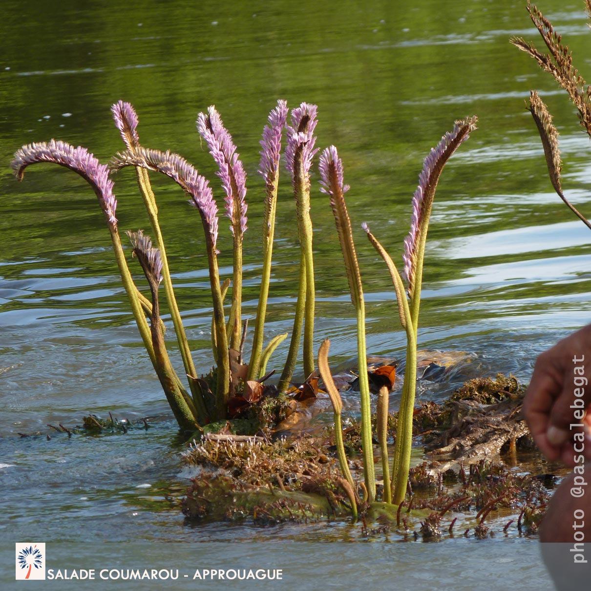 biopiratage foret amazonienne
