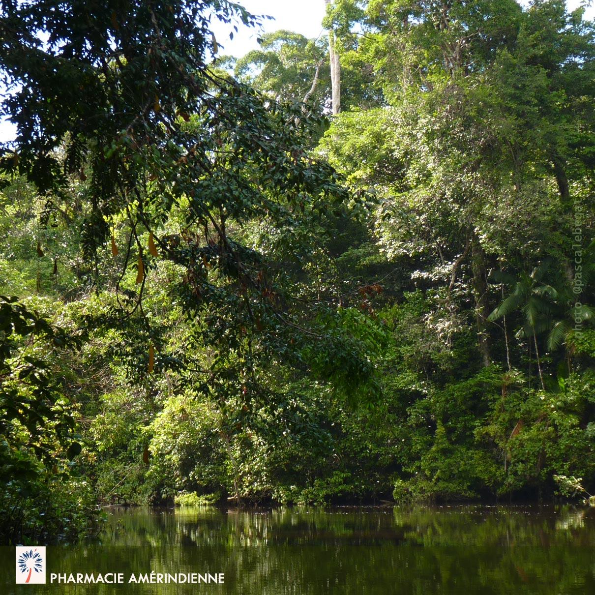 se soigner par les plantes en Amazonie