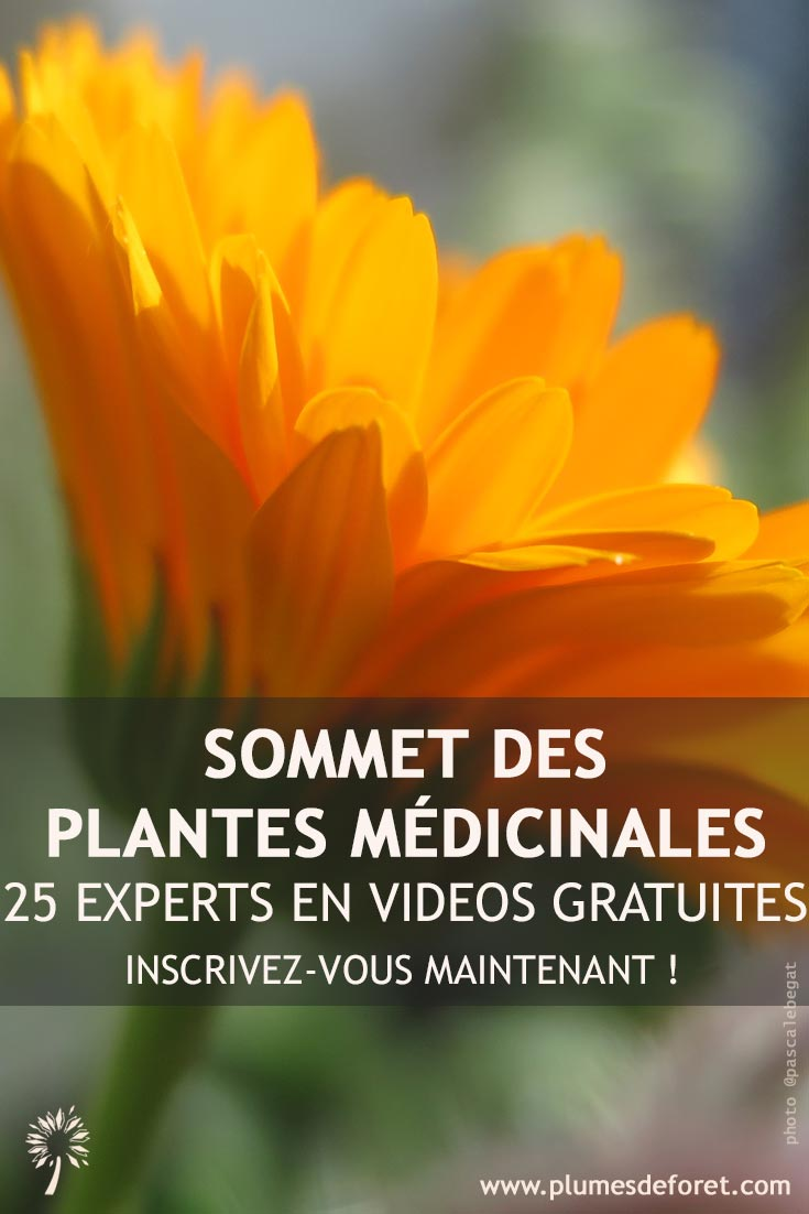 Fleur Souci - plante medicinale