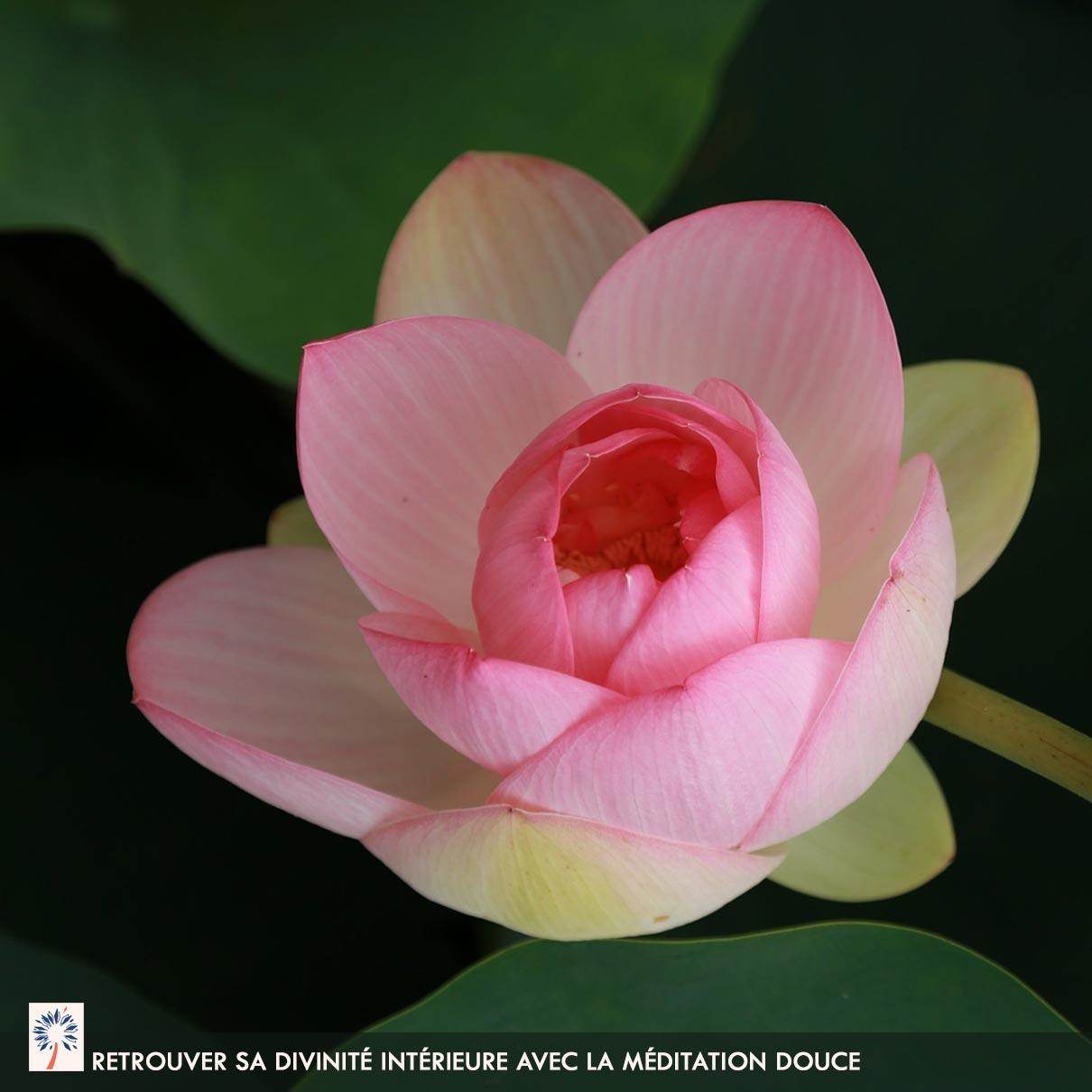 Bienfait meditation douce