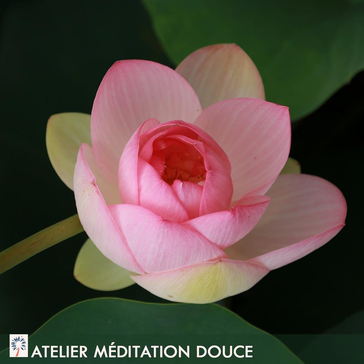 atelier méditer facilement