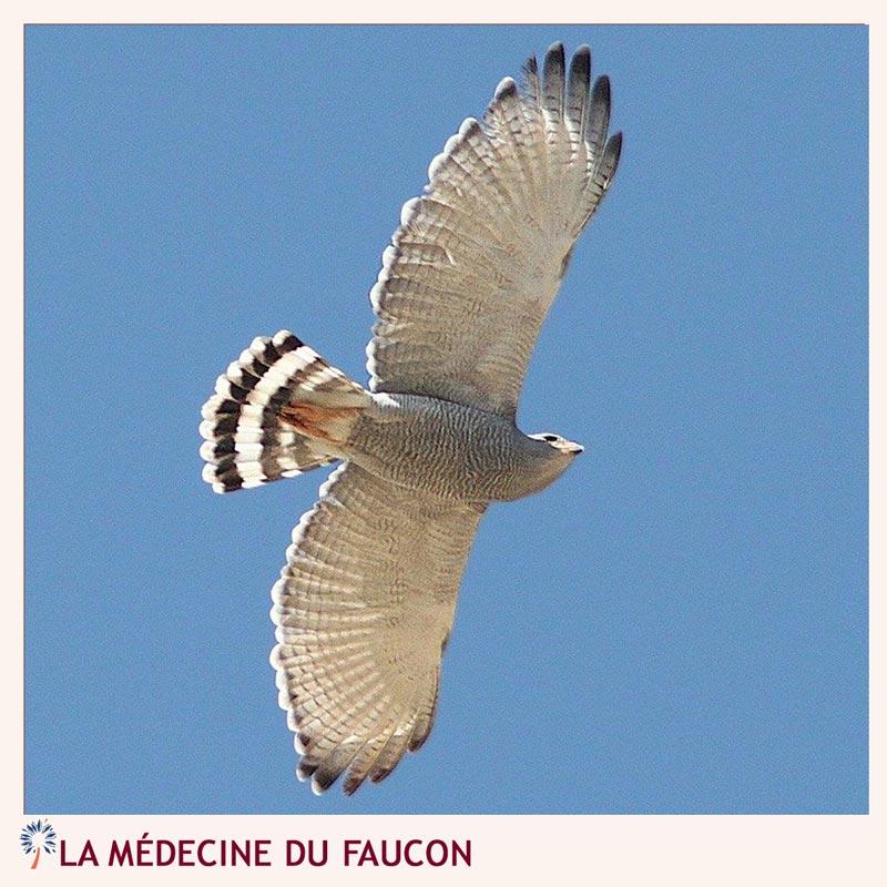 médecine faucon ouest