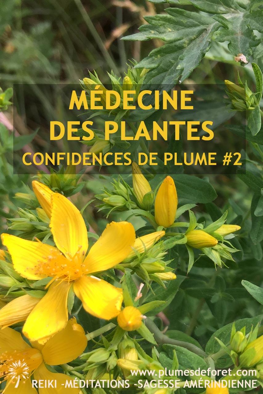 millepertuis plante médicinale