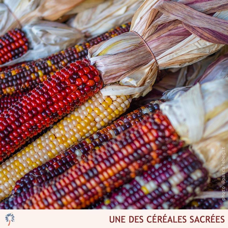 cereales amerindiennes